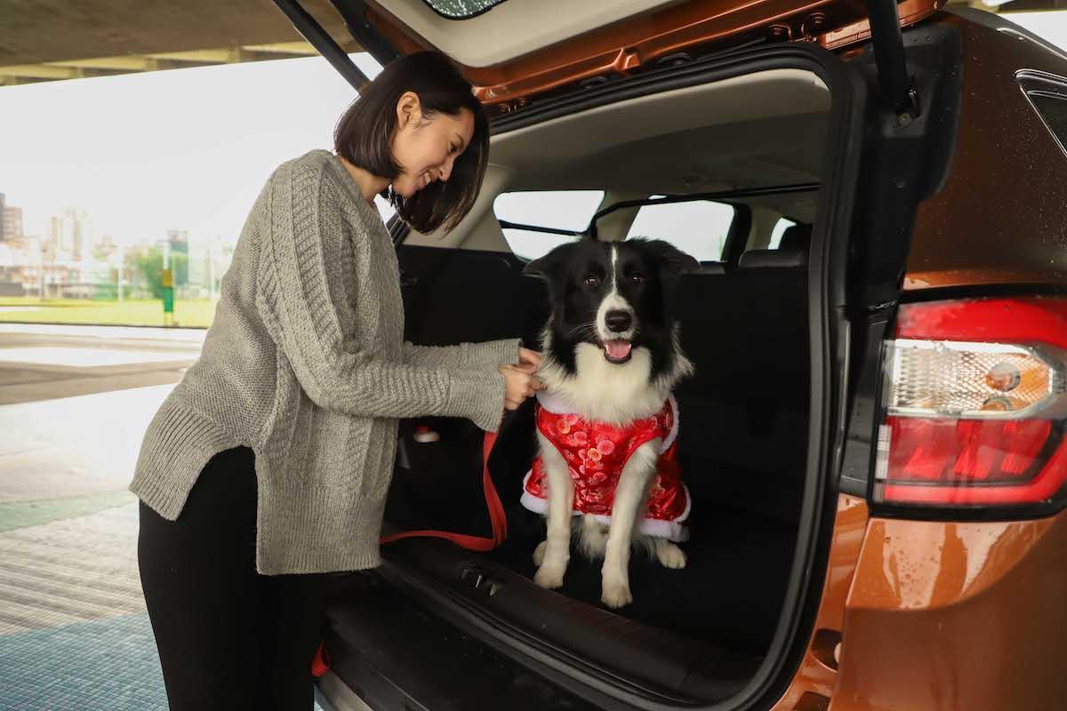 【圖二】為了出遊的安全性和舒適度,建議選擇寬敞和靜謐的SUV休旅車型,例如歐系智能SUV旗艦Ford Kuga,它寬闊的後座能提供寵物舒適的乘坐....jpg