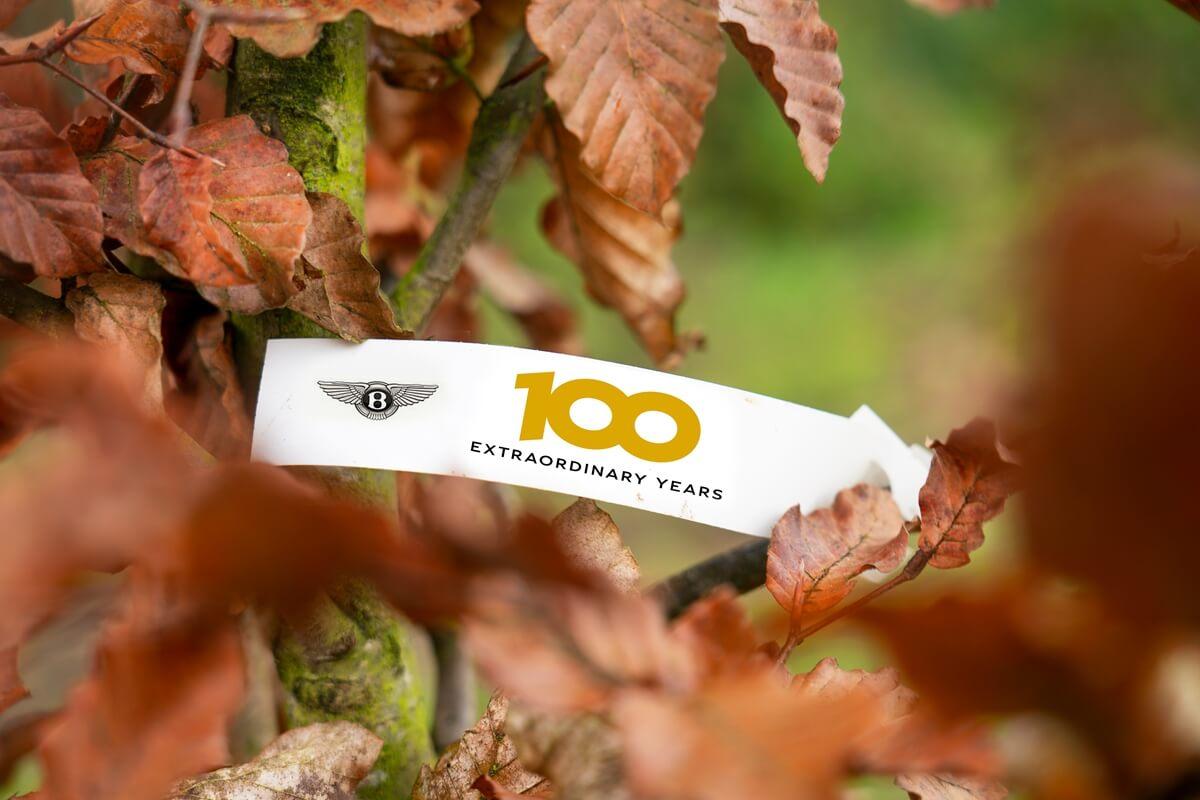 100_Trees-5.JPG